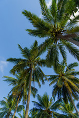 Coconut trees against sky