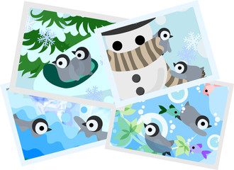 Memories of pretty baby penguins