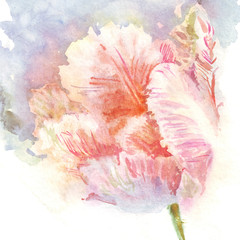 watercolor flowers tulips separately
