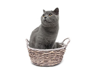 cat sitting in a wicker basket close-up on a white background