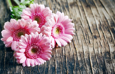 Wall Murals Gerbera Beautiful pink gerbera flowers