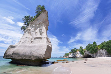 Photo sur Plexiglas Cathedral Cove Cathedral Cove beach on Coromandel Peninsula