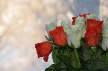 Roses, a bouquet of flowers