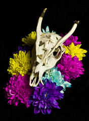 Deer Skull With Flowers
