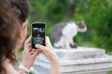 Woman takes pictures of gray cat on the phone in the park