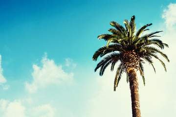 Palm tree / Summer poster / beautiful sky with clouds.