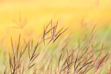 Flowers grass blurred bokeh background colorful