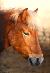 photo of the horse