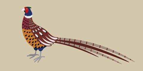 Cartoon detailed pheasant isolated on grey background