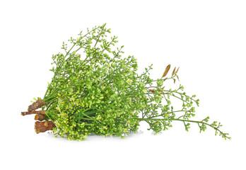 Siamese neem tree, Nim, Margosa, Quinine (Azadirachta indica A.