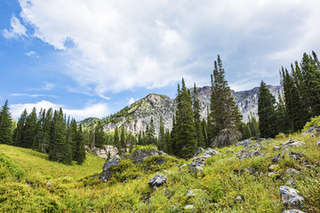 Albion Basin landscape scenery with alpine meadows and stormy sky photographed during summer near Salt Lake City, Utah