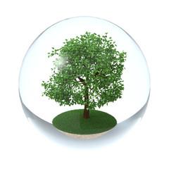 Tree in Transparent Sphere