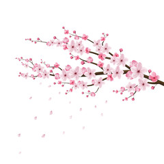 cherry blossom realistic,sakura japan, stock vector