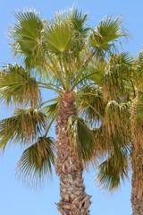 palm against the blue sky