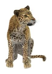 Canvas Prints Leopard Big Cat Leopard on White