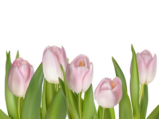 Pink flowers for border. EPS 10