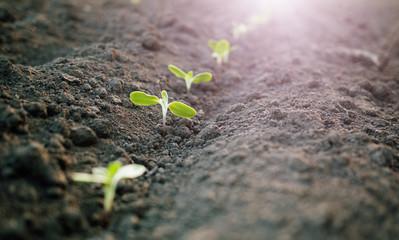 green plants seedling