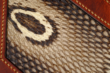 hood of a cobra and cobra skin  texture closeup, snake skin seamless macro