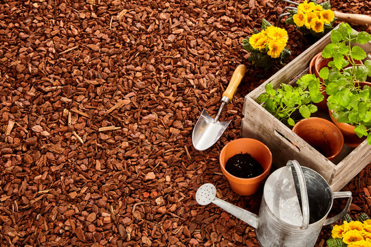 Garden tools and seedlings with copy space