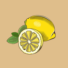 Lemon in vintage style. Colored vector illustration