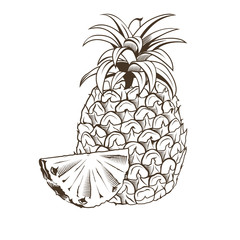 Pineapple in vintage style. Line art vector illustration