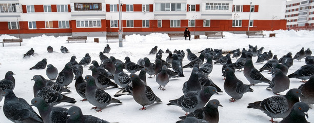 pack of pigeons and the elderly person in the city area
