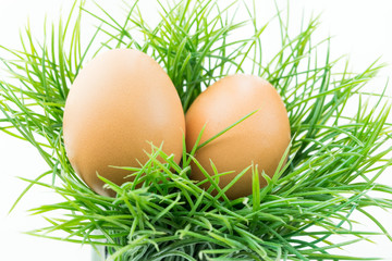 The hen egg in fresh grass with isolated background