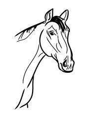 Graphic image of a horse's head in the form of contour lines of black. Vector on white background.