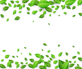Background with green leaves.