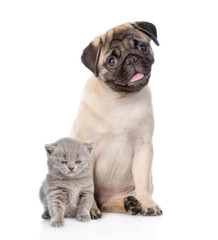 Funny pug puppy sitting with tiny scottish cat together. isolate