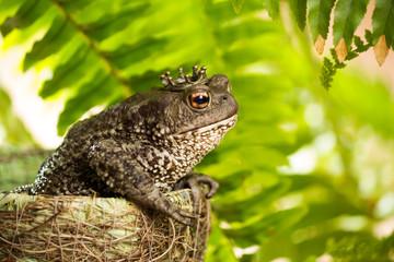 the frog Princess 2