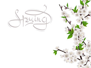 Cherry spring branch with white flowers. Handwritten word spring. Vector template for greeting card.