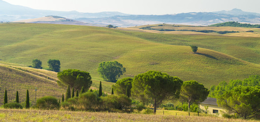 Tuinposter Heuvel view to hills and tree in tuscany in Italy
