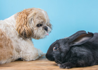 dog and rabbit have fun