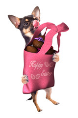 Cute dog chihuahua have a bag with chocolate Easter eggs between