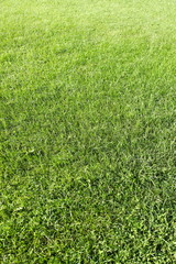 A newly seeded, fertilized and mowed lawn