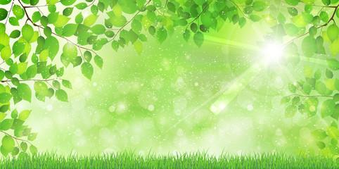 葉 新緑 木 背景