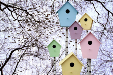 Starlings arrive. Colorful birdhouses on a background of tree br
