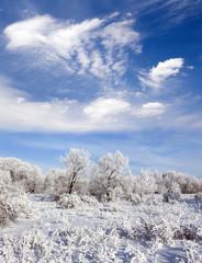 Winter frozen forest