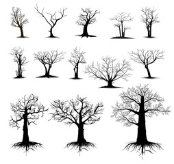 Set silhouettes of trees , tree icon, vector