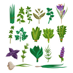 Cooking Herbs Collection