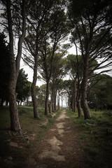 Alley on Mount Filerimos in Rhodes, Greece