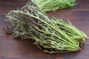サラダからし菜 Brassica juncea