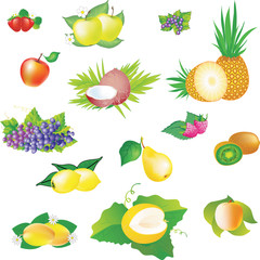 Vector images of fruits.