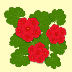Geranium red flower. Vector illustration