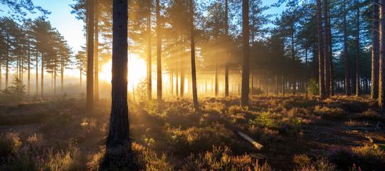 Sunrise in misty woods near Wareham, Dorset, England, UK
