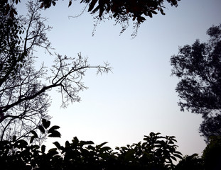 Backlit treetop Black like a picture frame