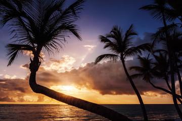 Tropischer Sonnenaufgang oder Sonnenuntergang mit Palmen