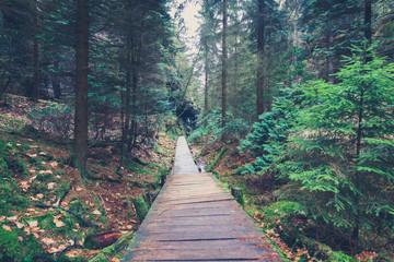 hiking path inside forest landscape