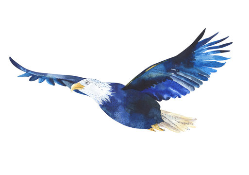 Watercolor isolated  illustration of a bird eagle in white backg